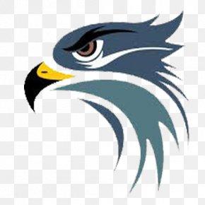 Hawk Logo Images Hawk Logo Transparent Png Free Download