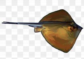 Raya - Canary Islands Atlantic Canary Fish Rajiformes Common Stingray PNG