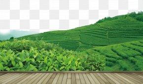 Tea - Tea Garden Yum Cha PNG