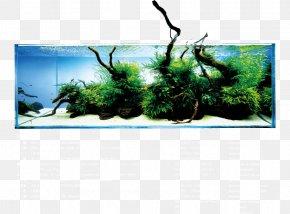 Aquariums Tropical Fish Aqua Design Amano Aquarium Lighting PNG