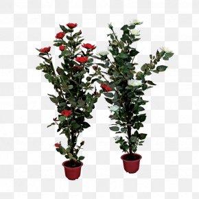 Plant - Rose Shrub Plant Clip Art PNG
