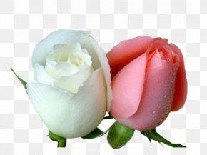 Flower - Garden Roses Desktop Wallpaper Flower Love Wallpaper PNG