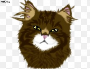 Realistic Cat Drawings - Whiskers Maine Coon Norwegian Forest Cat Wildcat Fur PNG