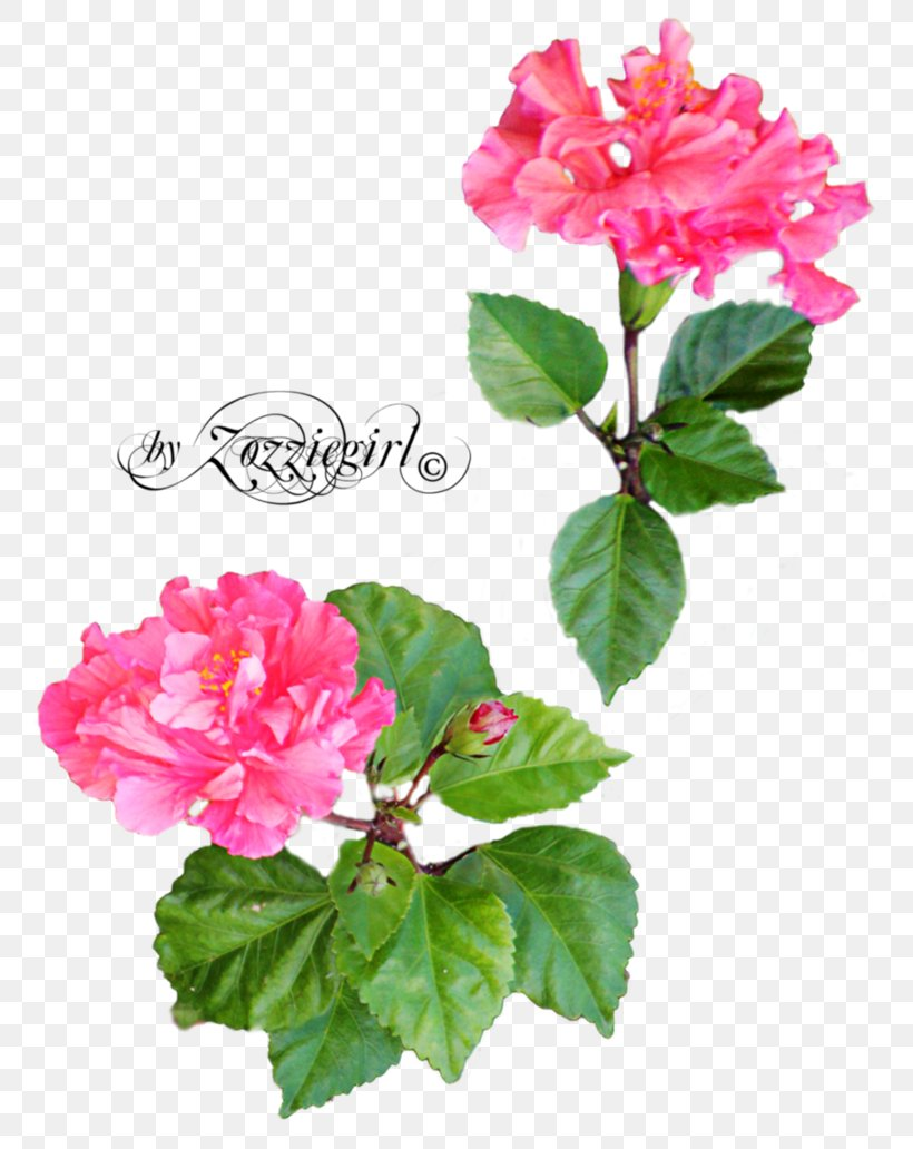 Rose Flower Desktop Wallpaper Png 774x1032px Rose