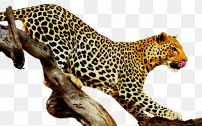 Leopard Tiger Felidae Stock Photography Royalty-free PNG