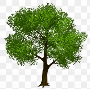 Transparent Green Tree Clipart Picture - Tree Clip Art PNG