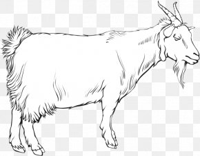 Goat - Cattle Ox Goat Sheep Line Art PNG