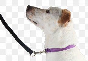 Dog - Dog Breed Companion Dog Leash Snout PNG