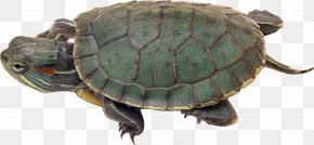 Turtle - Green Sea Turtle PhotoScape Wallpaper PNG