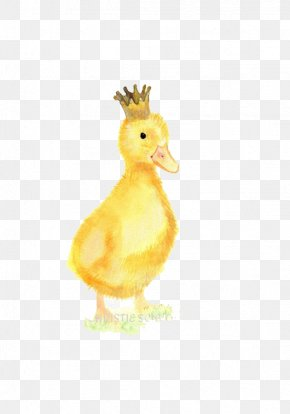 Duck - Duck Crown Illustration PNG