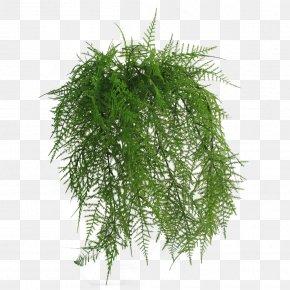 Flower - Flowerpot Wreath Wayfair Ornamental Grass PNG