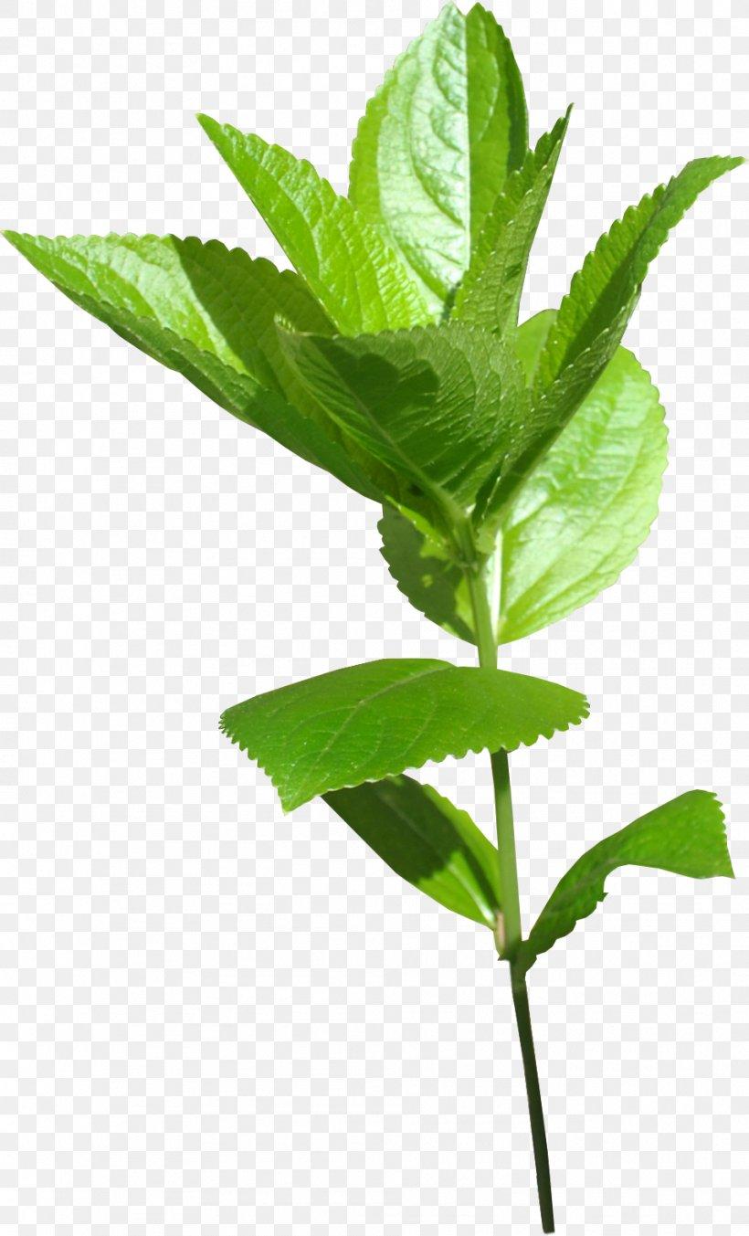 Leaf Green Plant Stem, PNG, 957x1580px, Leaf, Branch, Gold, Gold Leaf, Green Download Free