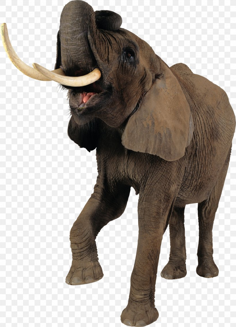 African Elephant Tiger Clip Art, PNG, 2274x3145px, Elephant, African Elephant, African Forest Elephant, Digital Image, Elephantidae Download Free