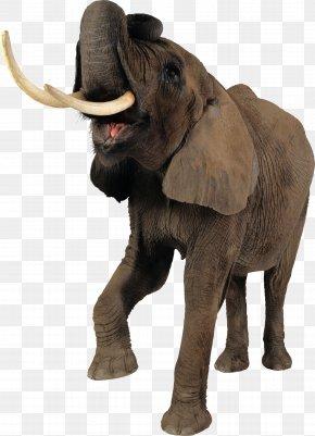 Elephant - African Elephant Tiger Clip Art PNG