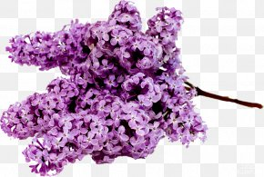 Bootlegging Ornament - Stock.xchng Common Lilac Flower Bouquet Image PNG