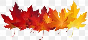 Red Autumn Leaves Transparent Clip Art Image - Autumn Leaf Color Clip Art PNG
