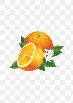 Fresh,fruit,Orange - Juice Lemon Fruit Orange PNG