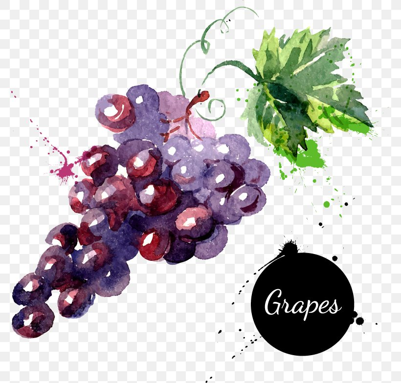 Grape Watercolor Painting Drawing Royalty-free, PNG, 773x784px, Grape, Drawing, Flowering Plant, Food, Fruit Download Free