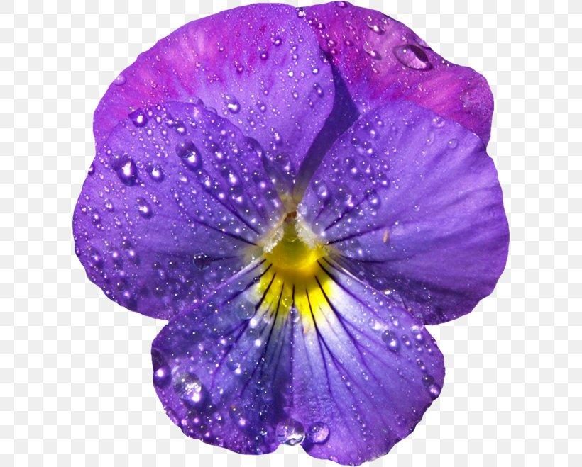 Common Blue Violet Sweet Violet Clip Art, PNG, 618x659px ...