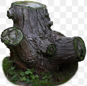 Old Tree Stump In-kind Material - Trunk Tree Stump PNG