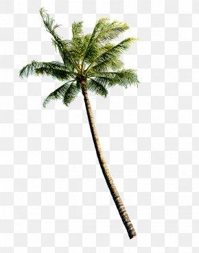 Trees - Coconut Euclidean Vector Tree PNG
