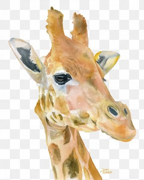 Giraffe - Giraffe Watercolor Painting Printmaking Art PNG
