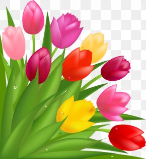 Beautiful Tulips - Flower Bouquet Tulip Mothers Day Clip Art PNG