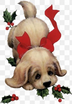 Dog - Puppy Santa Claus Dog Christmas Card PNG