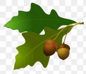 Leaves With Acorns - Acorn Leaf Oak Clip Art PNG