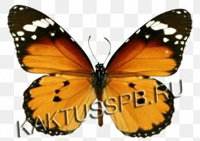 123 Kids FunButterfly - Monarch Butterfly Insect Plain Tiger Bee PNG