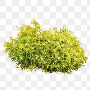 Bush Plant Image - Shrub Clip Art PNG