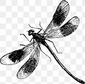 Dragonfly - Butterfly Dragonfly Illustration PNG