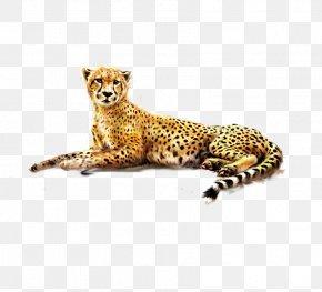 Leopard - Cheetah Felinae African Leopard PNG