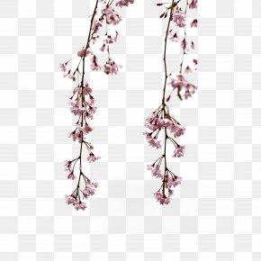 Small Fresh Japanese Pink Flower - Flower Gratis Download PNG