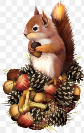 Vector Squirrel - Squirrel Chipmunk Clip Art PNG