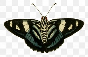 Bottom - Butterfly Insect Moth Pollinator Invertebrate PNG