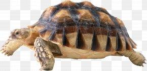 Turtle - Green Sea Turtle Reptile Icon PNG
