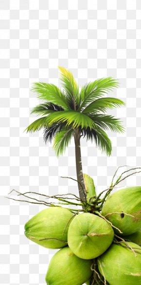 Coconut - Coconut Arecaceae Tree Royal Palm Beach PNG