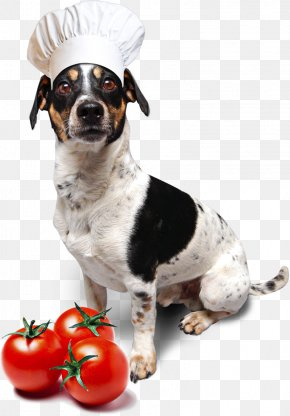 Puppy - Dog Breed Jack Russell Terrier Dachshund Puppy Seznam.cz PNG