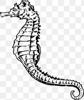 Sea Horse Images - Seahorse Clip Art PNG