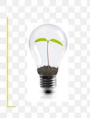 Light - Incandescent Light Bulb Energy Conservation Innovation Organization PNG