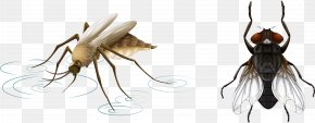 Vector Hand Painted Insects - Mosquito Net Insect Illustration PNG