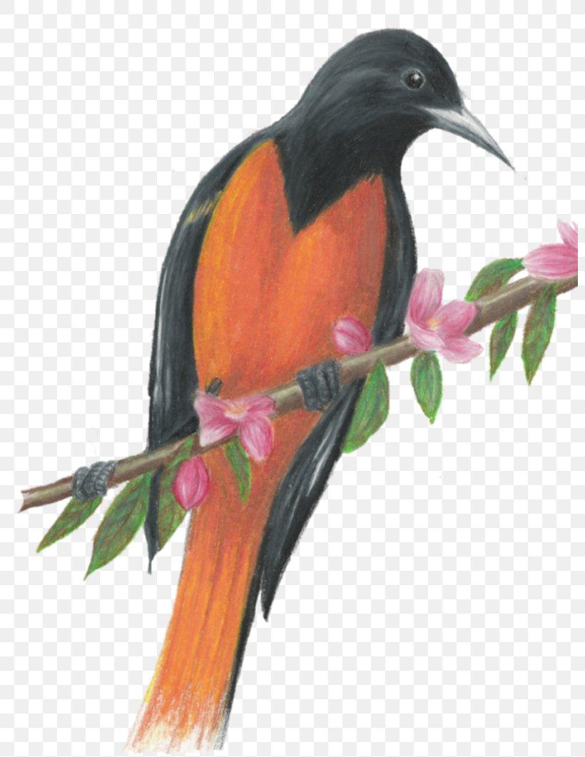 Beak Coraciiformes, PNG, 800x1061px, Beak, Bird, Coraciiformes Download Free