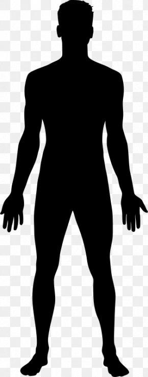 Human Embryogenesis - Homo Sapiens Human Body Clip Art PNG