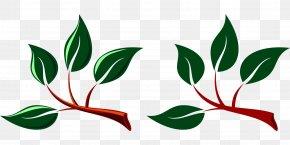 Green Leaf - Branch Leaf Tree Clip Art PNG