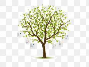Tree - Clip Art Vector Graphics Image Illustration Royalty-free PNG