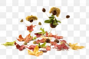Creative Autumn Elements - Conkers Acorn Stock.xchng Illustration PNG