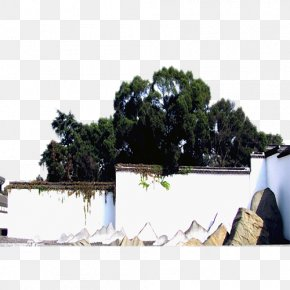 Fig Trees Backdrop - Wall Curtain Roof Light PNG