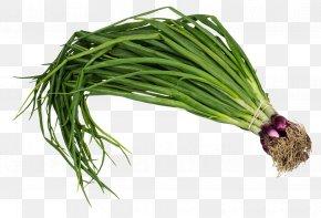 Scallion Spring Onion - Scallion Vegetable Onion PNG