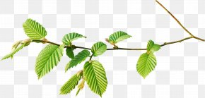 Forest Watercolor - Branch Leaf Tree Twig PNG
